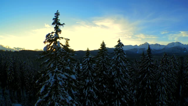 Aerial Shot Of Snowy Forest At Sunset