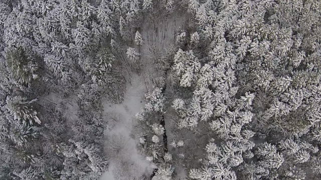 aerial shot of snowy trees - vermont stock videos & royalty-free footage