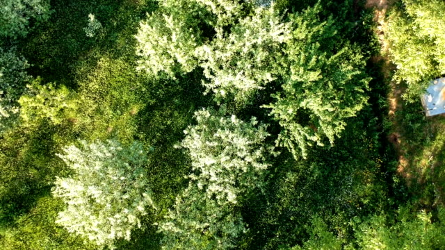 aerial shot of summer forest - multicopter stock videos & royalty-free footage