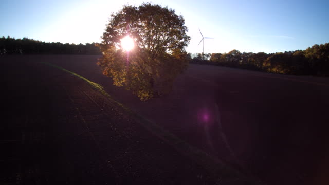 aerial shot of sun behind fall oak tree and wind turbine - pflug stock-videos und b-roll-filmmaterial