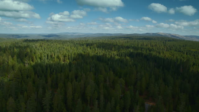 aerial shot of tahoe national forest - national forest stock videos and b-roll footage