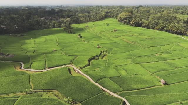 ws aerial shot of terraced fields, ubud, bali, indonesia - ubud stock videos & royalty-free footage