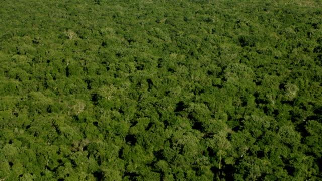 vídeos de stock, filmes e b-roll de aerial shot of thick forest in yucatan - yucatán