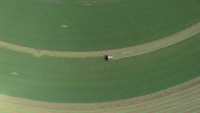 aerial shot of tractor harvesting alfalfa field with white storks - pflug stock-videos und b-roll-filmmaterial