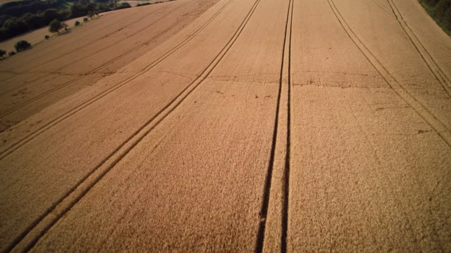 aerial shot of vast golden wheat field with tractor lines - tire track stock videos & royalty-free footage