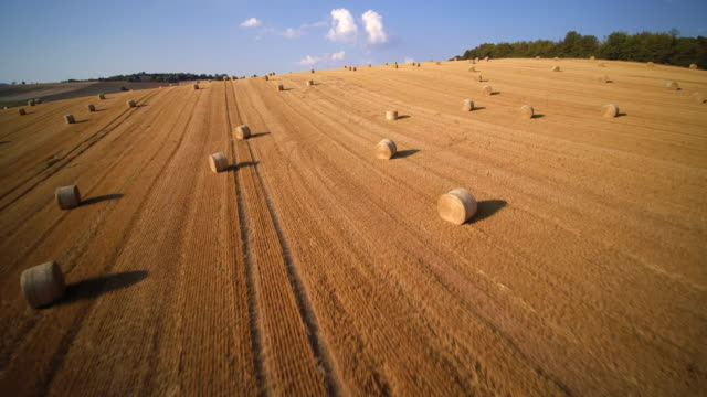 aerial shot of vast harvested wheat field with bales of straw in rolling landscape - hay field stock videos & royalty-free footage