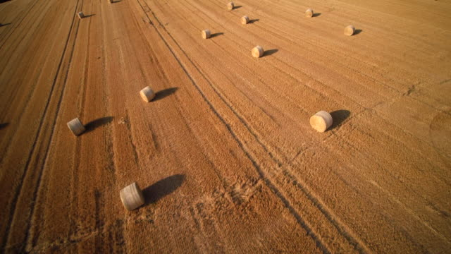 aerial shot of vast slanted harvested wheat field with bales of straw - bale stock videos & royalty-free footage