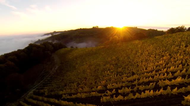 HD: Aerial Shot Of Vineyards At Sunset