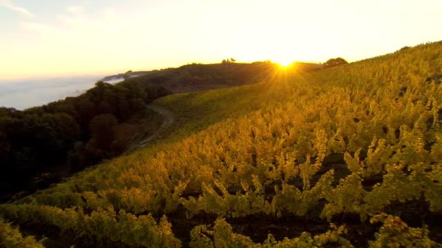 HD: Aerial Shot Of Vineyards