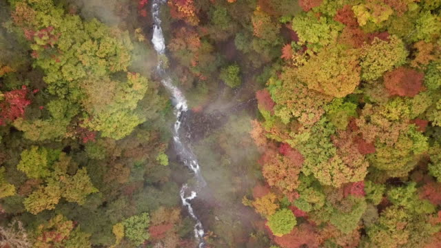 aerial shot of waterfall in autumn with forest changed color at nikko japan - ginkgo stock videos & royalty-free footage