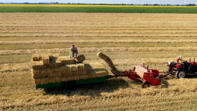 hlevaha kiev province ukraine july 20 2019 aerial shot of wheat harvesting in farm field - cereal plant点の映像素材/bロール