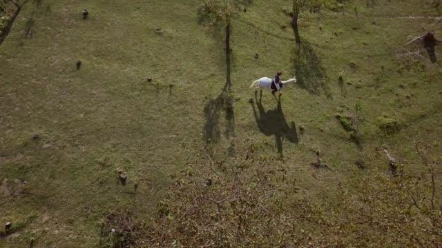 stockvideo's en b-roll-footage met luchtfoto van vrouw rijden wit paard rondom de boom stompen - alleen één mid volwassen vrouw