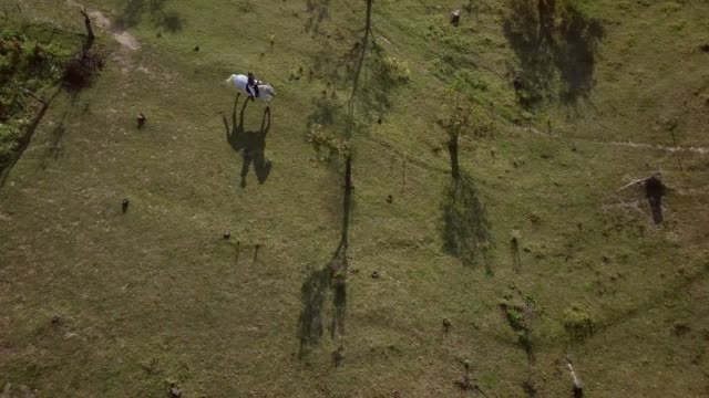 aerial shot of woman riding white horse on a field - saddle stock videos & royalty-free footage