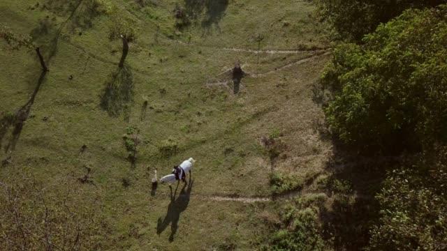 stockvideo's en b-roll-footage met luchtfoto van vrouw rijden wit paard op groot veld - alleen één mid volwassen vrouw