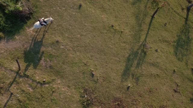 aerial shot of woman riding white horse steadily on ranch - ceppaia video stock e b–roll