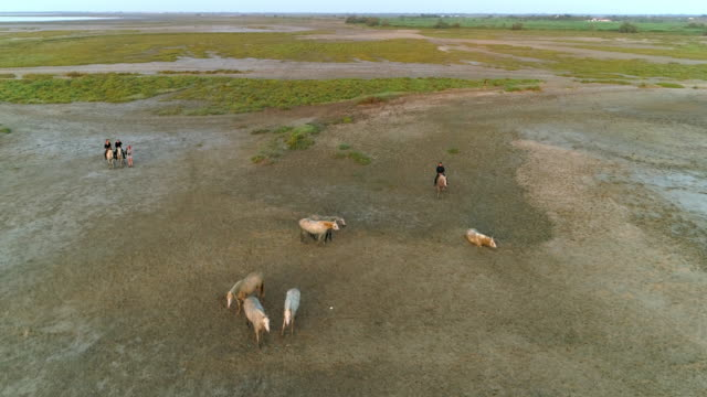 aerial shot of wranglers and horses on beach, drone is flying forward - camargue, france - camargue stock-videos und b-roll-filmmaterial