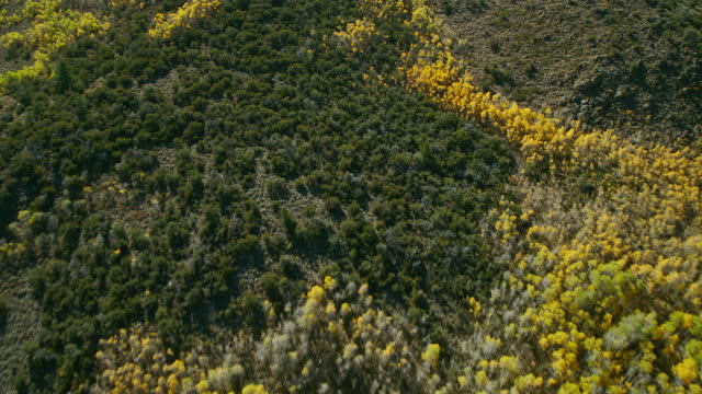 aerial shot of yellow aspens in autumn - aspen tree stock videos & royalty-free footage