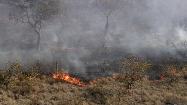 aerial shot over a bush fire at the kruger national park, south africa. - 事故・災害点の映像素材/bロール
