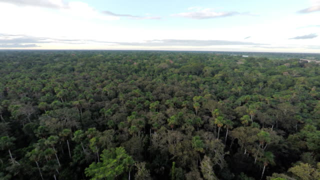 vídeos de stock e filmes b-roll de aerial shot over amazon jungle treetops + horizon - equador américa do sul