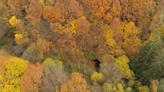 stockvideo's en b-roll-footage met aerial shot over forest golden fall birch trees - berk