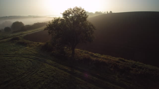 vídeos y material grabado en eventos de stock de aerial shot over grass and fall willow tree with early morning fog on uprising ploughed earth and green fields - entorno y ambiente