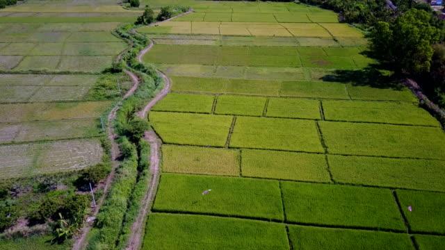 vídeos de stock, filmes e b-roll de campo de arroz tiro aéreo de drone, arroz terraço do agricultor na província de chiang mai, tailândia. - top