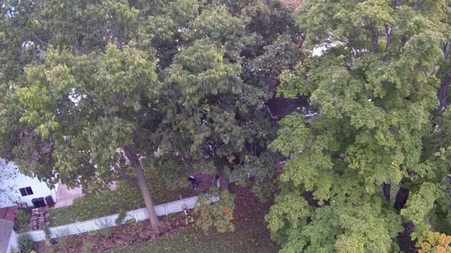 aerial shot rises over a tall tree to reveal a quiet street of a suburban neighborhood in tskilwa illinois and then drops behind the tree again - illinois stock-videos und b-roll-filmmaterial