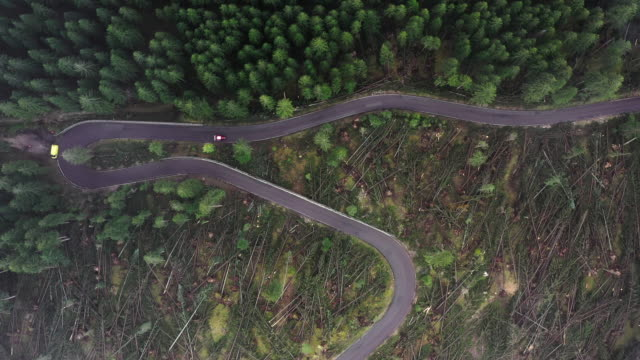 aerial shot showing cars driving on a winding mountain road and the contrast between a damaged and undamaged section of forest following a large winter storm, italy - 分離点の映像素材/bロール