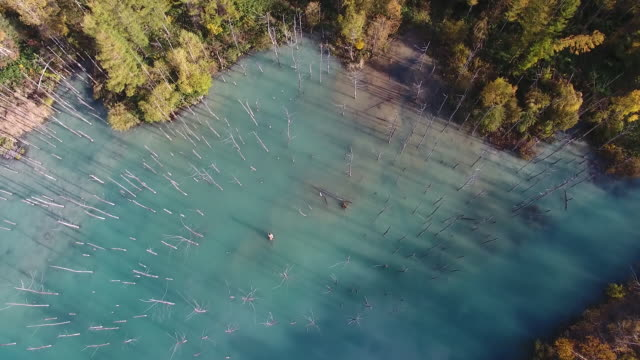 aerial shot taken by drone: bird's-eye view of the shirogane blue pond - turquoise colored stock videos & royalty-free footage