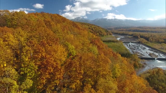 aerial shot taken by drone: trees in autumn foliage around the shirogane blue pond - biei town stock videos & royalty-free footage