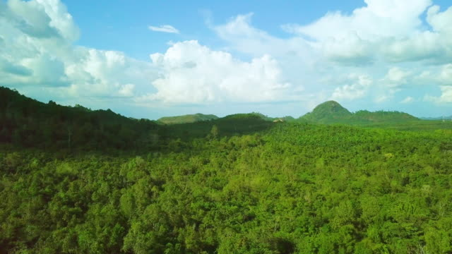 Aerial shot tropical forest