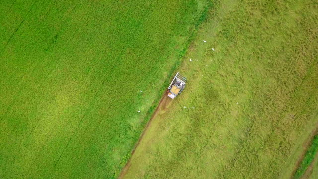aerial shot view of tractor on harvest field in thailand - tractor stock videos and b-roll footage