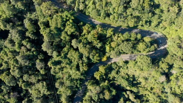 4k aerial shot winding road on mountain. - tropical tree stock videos & royalty-free footage