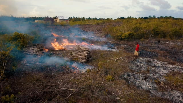 vídeos y material grabado en eventos de stock de aerial/ slash and burn farming and agriculture - biodiversidad