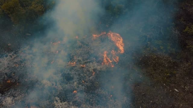 Aerial/ slash and burn farming and agriculture