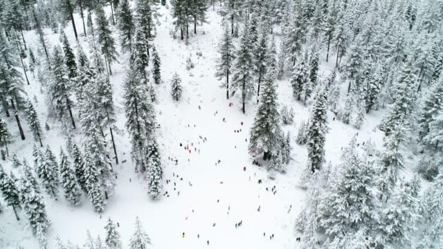 vídeos y material grabado en eventos de stock de trineo aérea winter wonderland - pinar