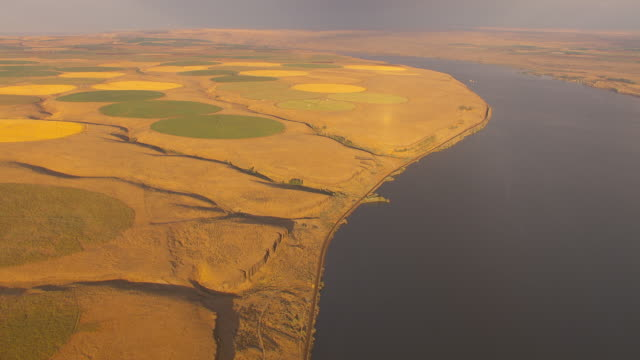 aerial slow motion camera flies over the columbia river featuring green and golden circular farm fields created by center pivot irrigation systems in an otherwise arid landscape. - columbia center stock videos & royalty-free footage