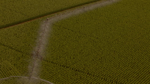 vidéos et rushes de aerial slow motion shot flying low over a farm field and a center pivot irrigation system spraying water on a corn crop. - patchwork landscape