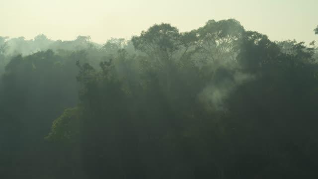 vídeos de stock, filmes e b-roll de aerial smoke forest fire amazon rainforest - região amazônica