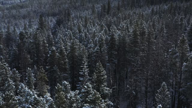 aerial, snow covered trees - plant attribute stock videos and b-roll footage