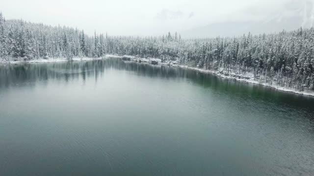 vídeos de stock e filmes b-roll de aerial snow pine tree - cabana de madeira