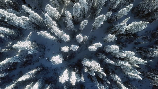 aerial snow winter forest - neve video stock e b–roll