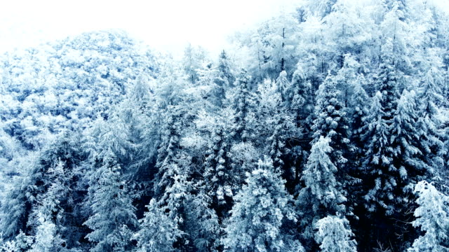 vídeos de stock, filmes e b-roll de floresta de montanha nublada de inverno nevado aéreo - pinhal