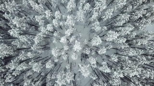 vídeos de stock, filmes e b-roll de antena espiral neve pinho - pinhal