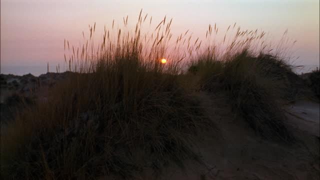 aerial sun setting behind plants growing on beach / spain - bulrush stock videos & royalty-free footage