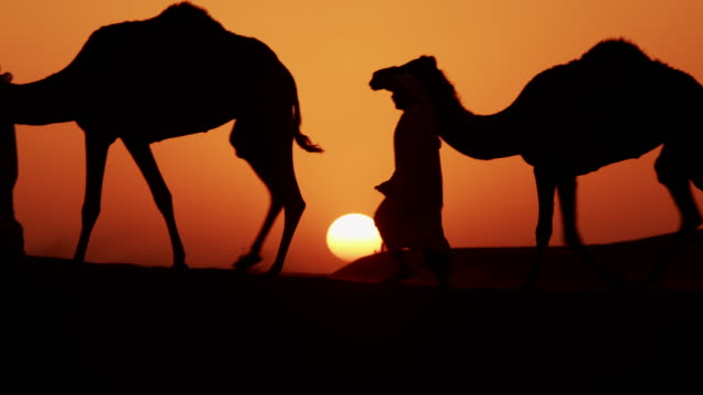 aerial sunset of camel train middle eastern desert - camel train stock videos & royalty-free footage