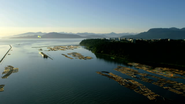 aerial sunset wreck beach vancouver british columbia canada - forestry industry stock videos & royalty-free footage