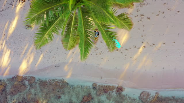 aerial: surfer relaxing under palm fronds, oahu, hawaii - frond stock videos & royalty-free footage