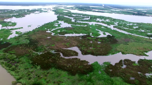 Aerial: Swamp Tributaries flow downstream and meet with the Salt water of the Gulf of Mexico