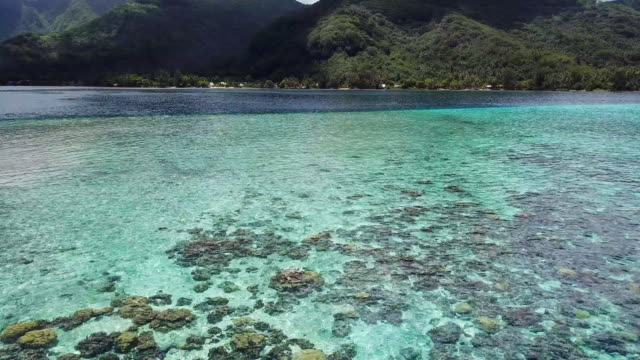 aerial: the calm tropical ocean in front of moorea island in the french polynesia - moorea stock videos & royalty-free footage